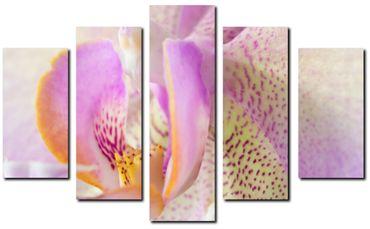 Orchidee 2020144676