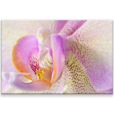 Blüte Makro 1 – Bild 1