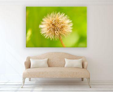 Blüte Makro 12 – Bild 2
