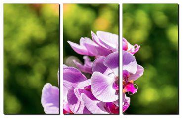 Orchidee in der Sonne 1