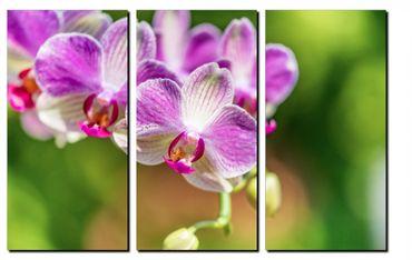 Orchidee in der Sonne 2