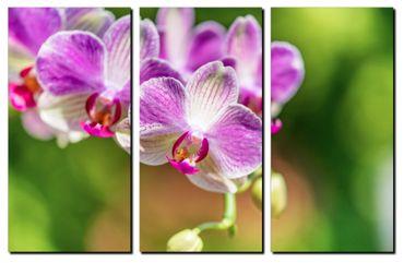 Orchidee in der Sonne 3