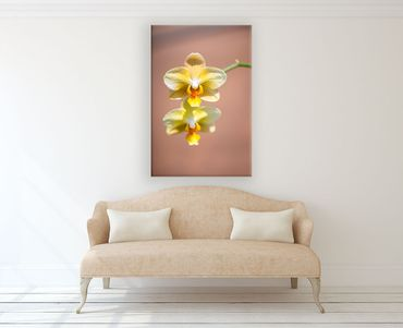 Orchidee in der Sonne 13 – Bild 2