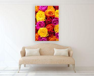 Rose 2020154129 – Bild 2