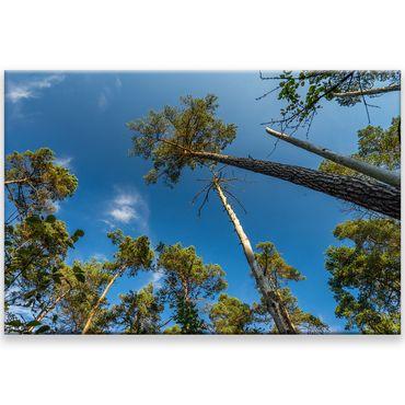 Leinwandbilder natur online bestellen bilder 58 - Leinwandbilder bestellen ...
