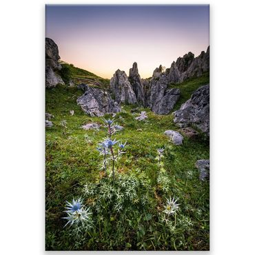 Limited Edition Spanien Picos Distel – Bild 1