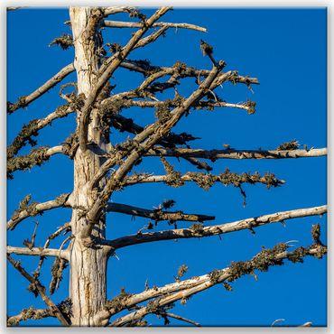 Baum Struktur 1 – Bild 1
