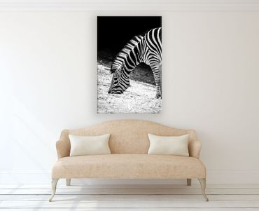 Limited Edition Zebra 1  – Bild 2