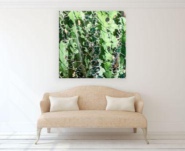 Kaktus Marrakesch 4 – Bild 2