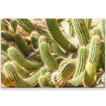 Kaktus Marrakesch 16 – Bild 1