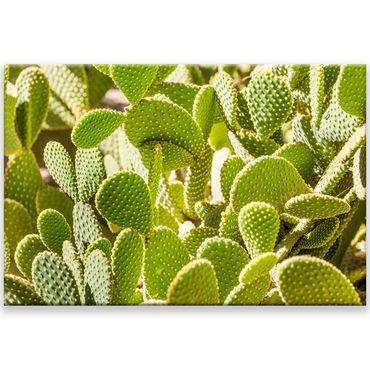 Kaktus Marrakesch 17 – Bild 1