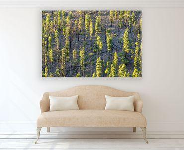 Bäume im letzten Licht 2 – Bild 2