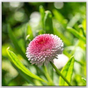 Weisse rote Blüte – Bild 1