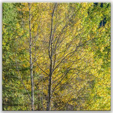 Baum Struktur – Bild 1
