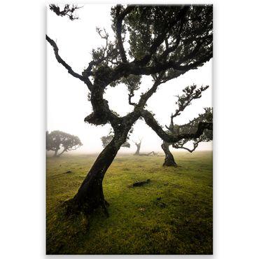 Madère nature 2020159595 – Bild 1