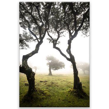 Madère nature 2020159596 – Bild 1