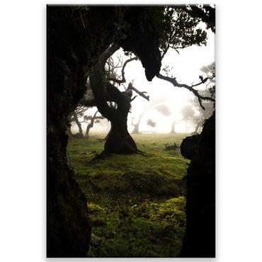 Madère nature 2020159597 – Bild 1