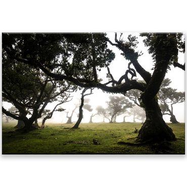 Madère nature 2020159600 – Bild 1