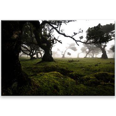 Madère nature 2020159601 – Bild 1