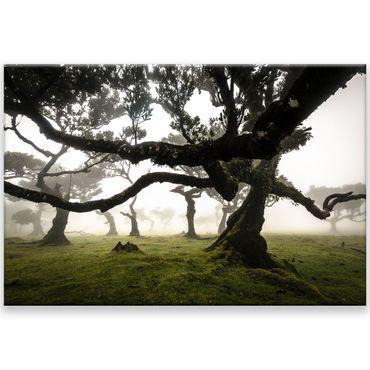 Madère nature 2020159602 – Bild 1