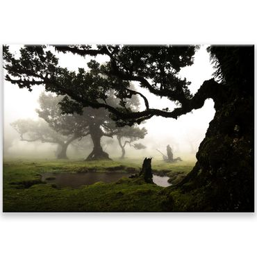 Madère nature 2020159604 – Bild 1