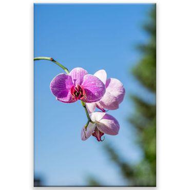 Orchidee Blüten 1 – Bild 1