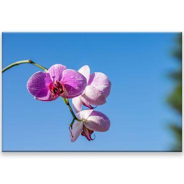 Orchidee Blüten 2 – Bild 1