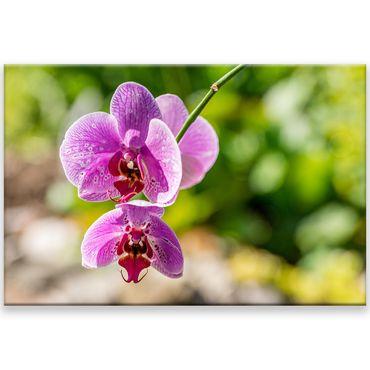 Fleur orchidée 2020159767 – Bild 1