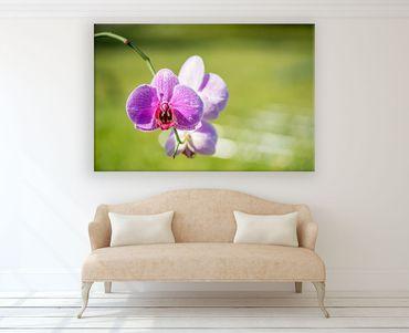 Fleur orchidée 2020159770 – Bild 2