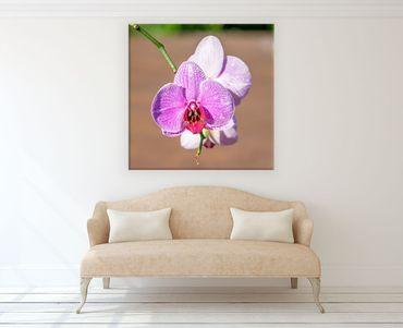 Fleur orchidee 2020159933 – Bild 2