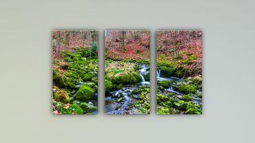 Wasserlauf Moos Wald – Bild 1