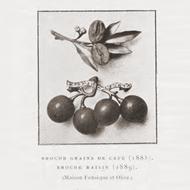 Kostbare Früchte - Brosche von Fonsèque & Olive in Amethyst & Diamanten, Paris 1889. Photo © 2019 Hofer Antikschmuck Berlin
