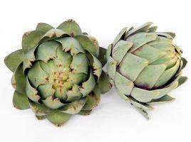 Artischocke, Grüne - 20 Samen