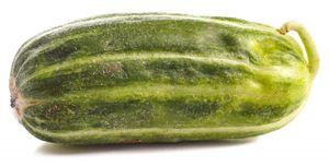 """Mini- Melonengurke """"Carosello Scopatizzo Barese""""  - 10 Samen"""