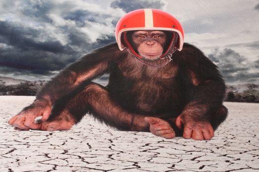 Jersey gemustert - Panel Digitaldruck Monkey  Multicolor