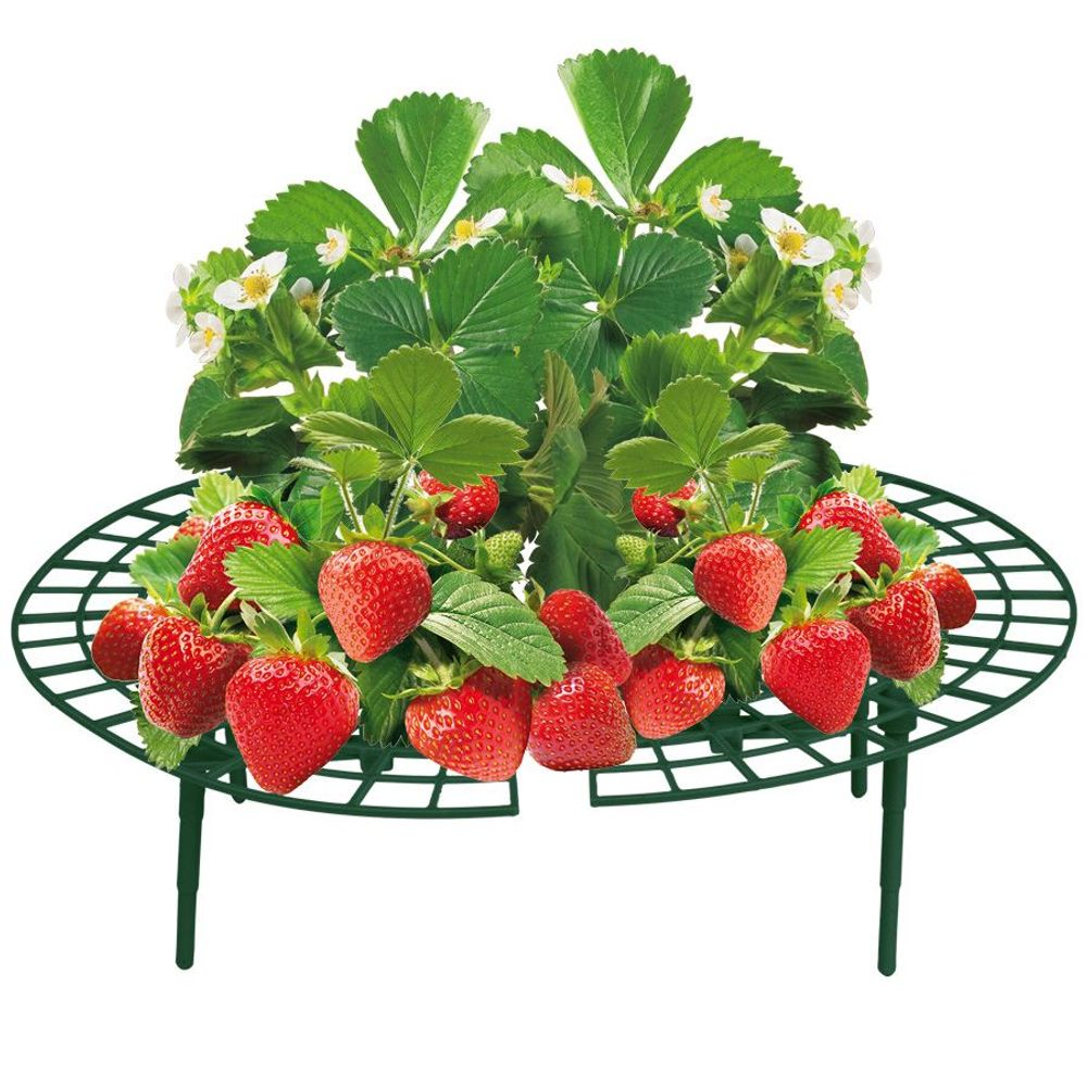 5er-Set Erdbeer-Reifer Erdbeerstütze Pflanzenhalter Gitterablage Schneckenschutz – Bild 1