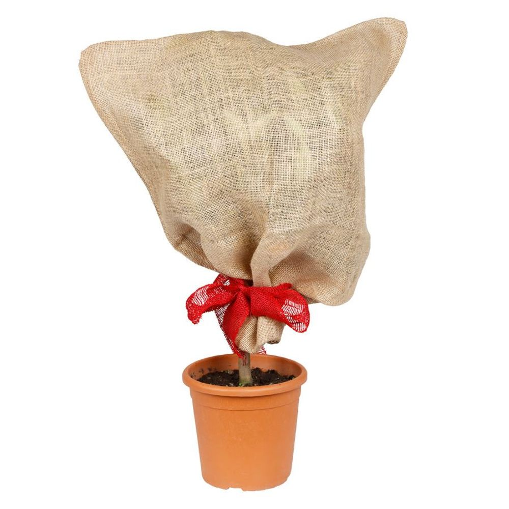 Jutesack natur Pflanzen-Schutzsack Winterschutz Pflanzenschutz Frostschutz 57x78 – Bild 1