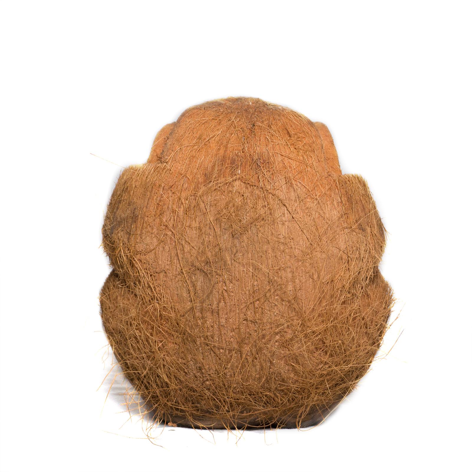 Sehe Nichts Affe Figur aus Kokosnuss ca. 18cm Skulptur – Bild 4