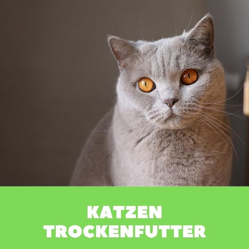 Katzenfutter trocken