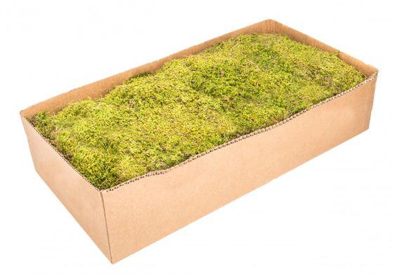 Moos Platten natur 1kg | Lappenmoos  – Bild 1