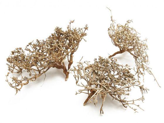 Dry Busch Zweige natur 0,5kg – Bild 1