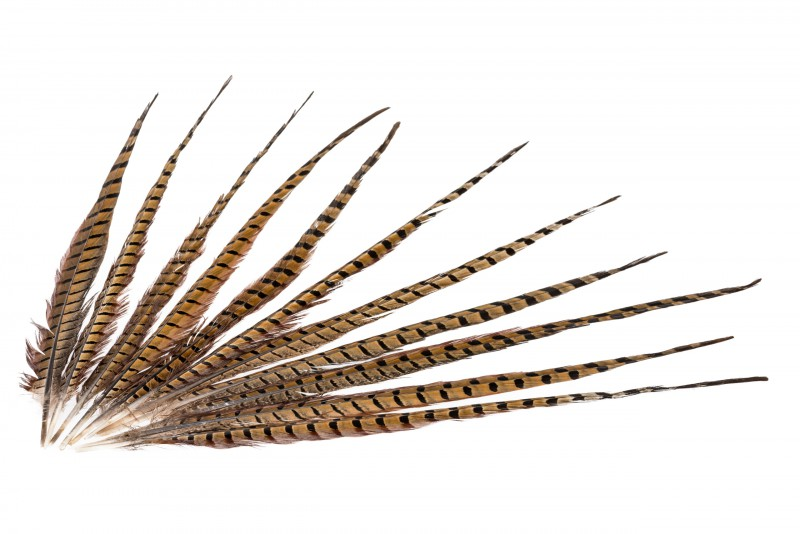 Fasanenfeder natur 10 Stk. | Fasanfedern