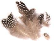 Perlhuhnfedern natur 15g | Perlhuhn Feder – Bild 2