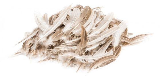 Dekofeder braun mit weißen Streifen 45g – Bild 1