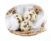Wachteleier im Nest 1 Box mit 12 Nestern – Bild 1