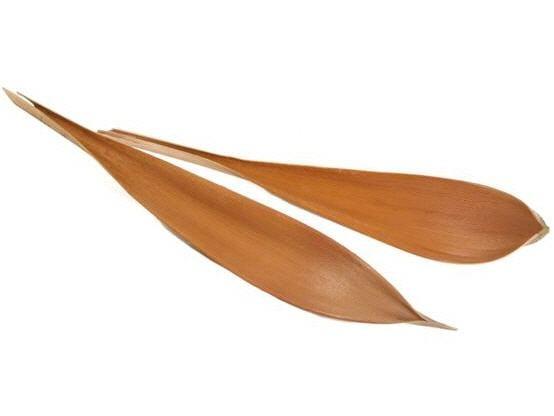 Kokosblatt groß 60-80cm – Bild