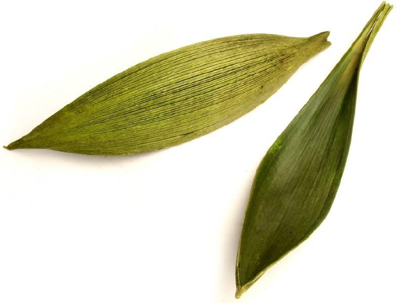 Kokosblatt medium grün 15-40cm | Palmen Blatt