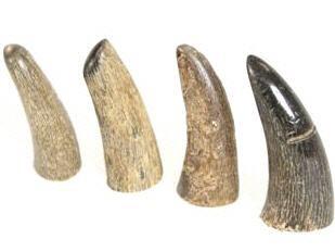 Büffelhornspitzen gebürstet 5cm | Wasserbüffelhorn