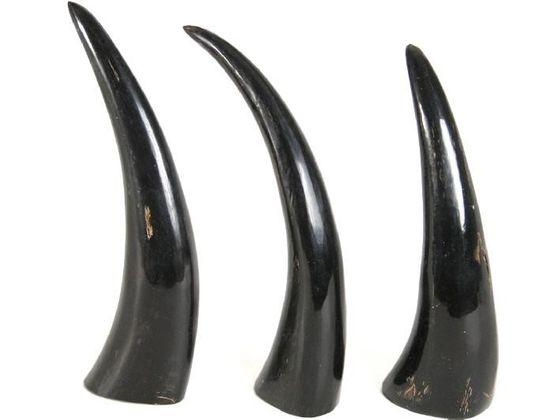 Büffelhorn poliert 15-20cm Wasserbüffelhorn Massiv – Bild