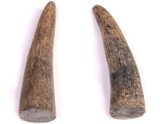 Büffelhornspitzen natur 10-15cm | Wasserbüffelhorn – Bild